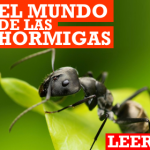 El mundo de las hormigas.