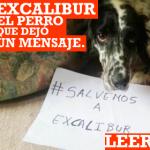 Excálibur, el perro que nos hizo reflexionar